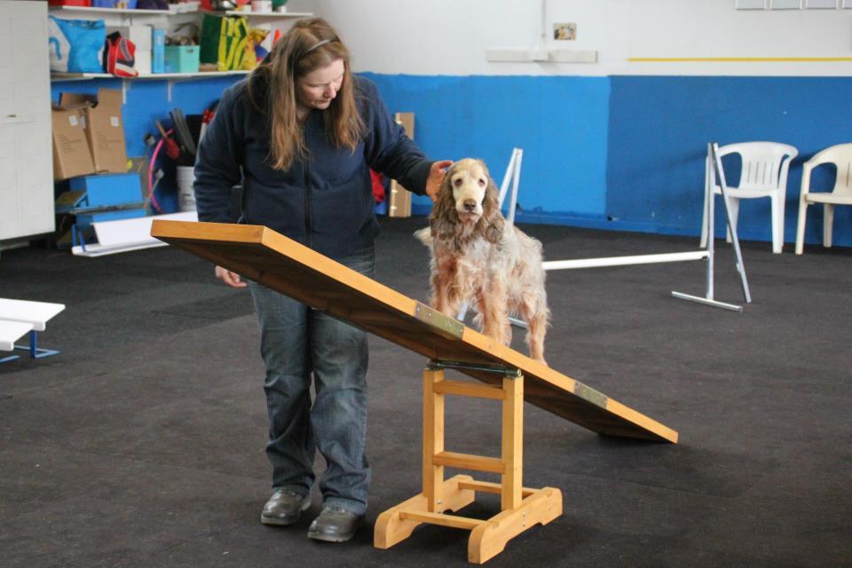 Hondenschool zaandam