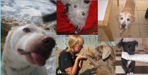 Fabulous Dogs Hondentrimsalons en webshop